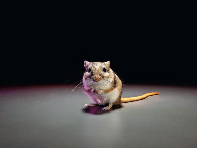 На личном опыте и во имя науки: тестирования на животных