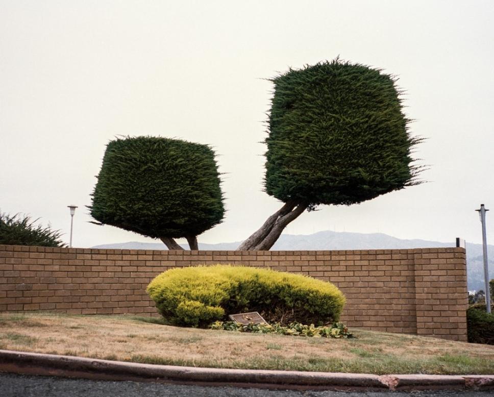 Битва домов и растений в Калифорнии 3