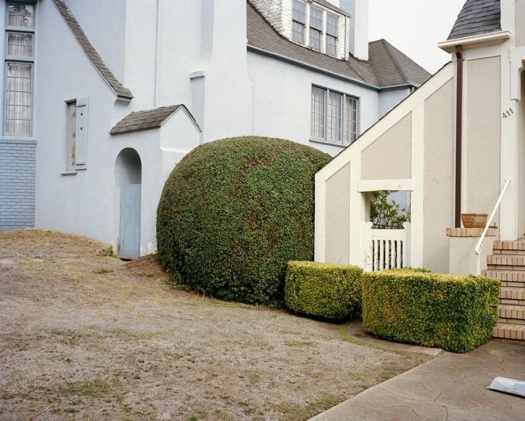 Битва домов и растений в Калифорнии 4