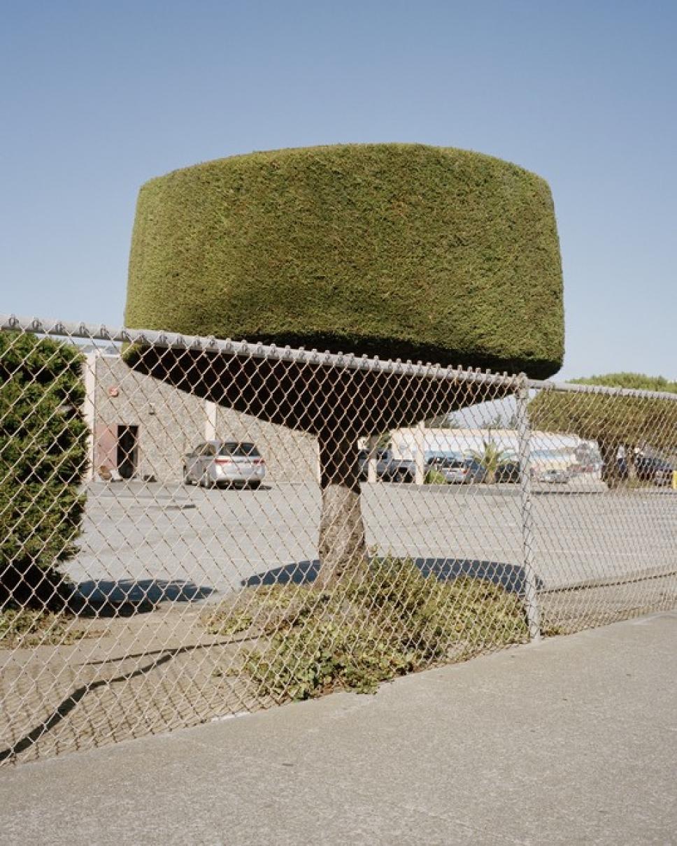 Битва домов и растений в Калифорнии 5