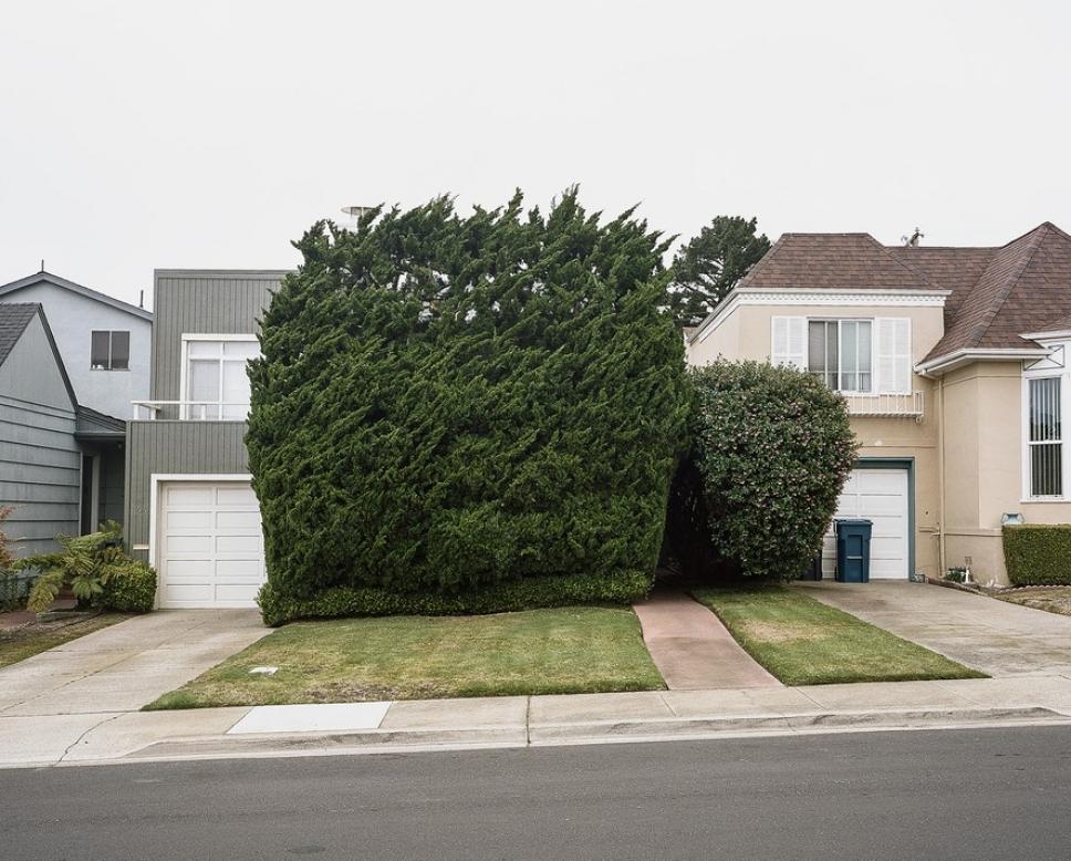 Битва домов и растений в Калифорнии 8