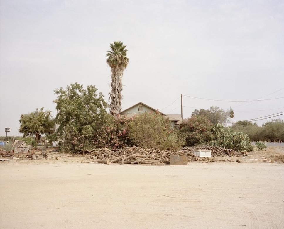 Битва домов и растений в Калифорнии 9