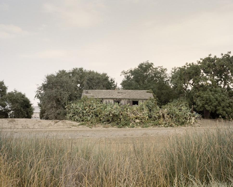 Битва домов и растений в Калифорнии 10