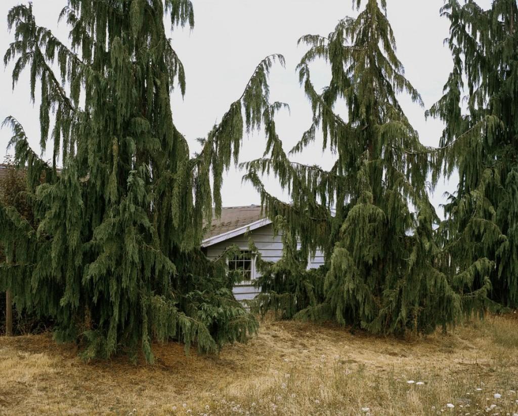 Битва домов и растений в Калифорнии 14