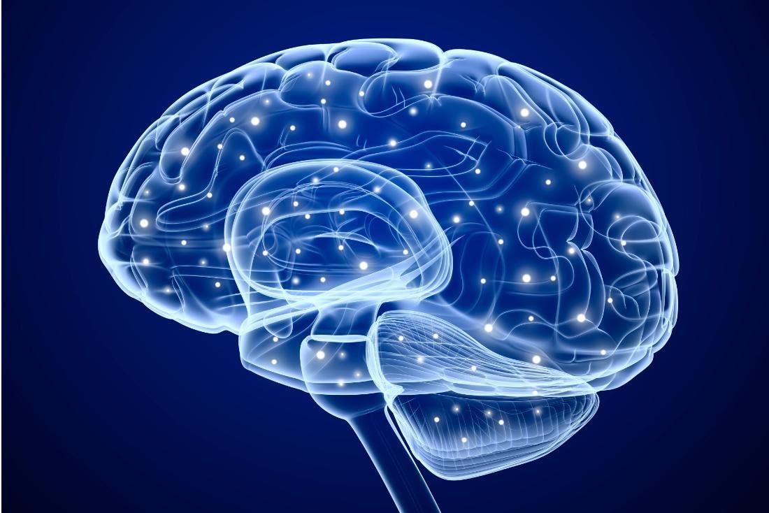 Дик Свааб. «Мы — это наш мозг»