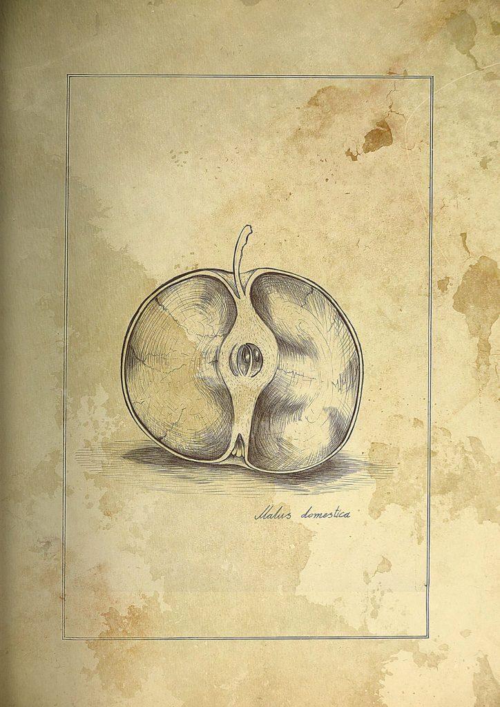 Апорт яблоко Алматы Верный еда правила жизни