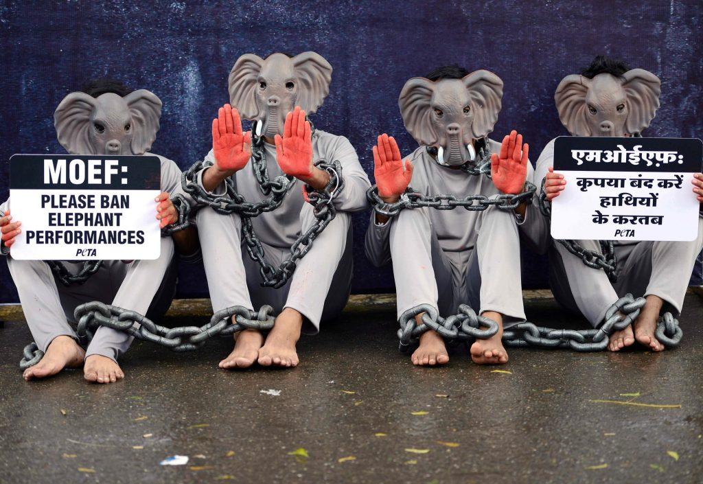Слоновая новость