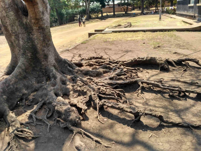 Письма из Африки. Блодсакеры и вампиры