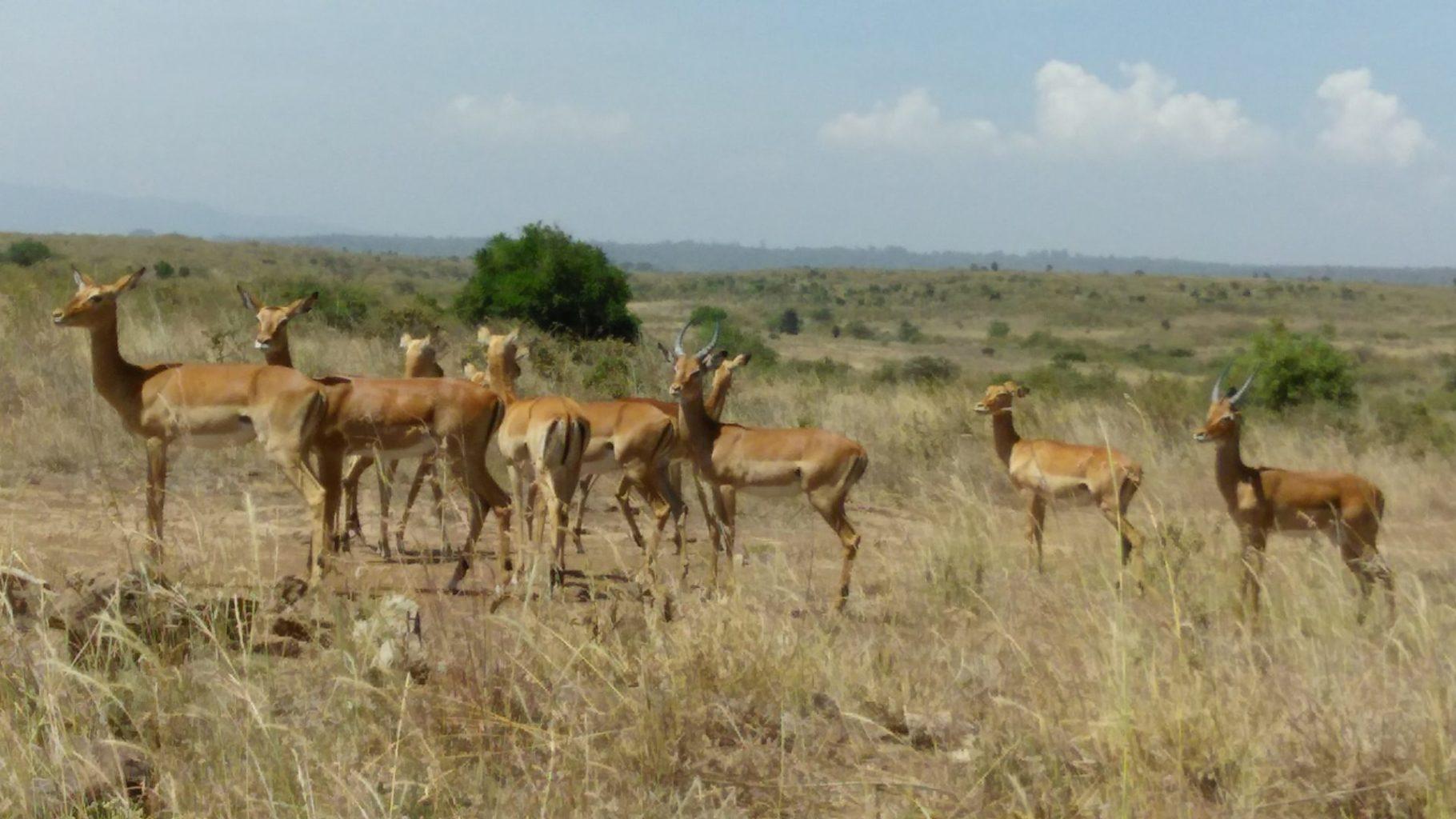 Письма из Африки. В поисках племени Камба