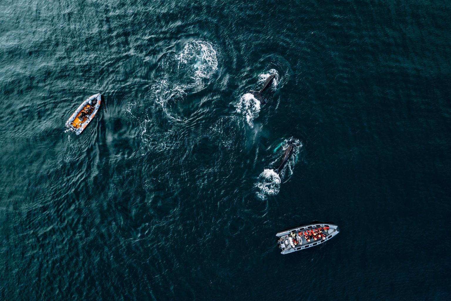 Скорость циркуляции Атлантического океана достигла минимума за последние 1600 лет