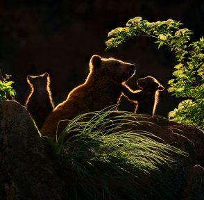 медведь медвежонок медведица семья животные природный парк