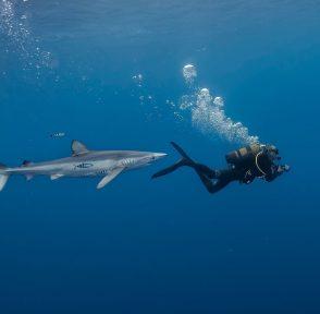 акваланг плавание синяя акула Азорские острова Португалия