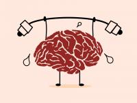 мозг ум глупость уровень интеллекта исследование наука