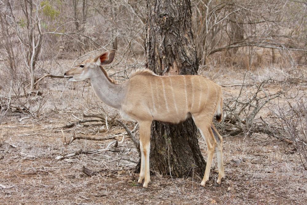 охотиться на диких животных Африка охота оружие стрельба развлечение хобби