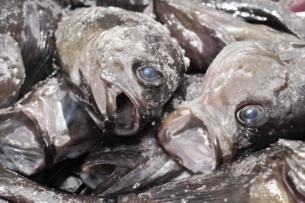 Названа причина массовой гибели рыбы в Атырау