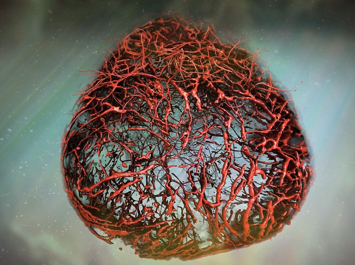 Впервые кровеносные сосуды человека вырастили в чашке Петри