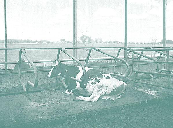 Нидерланды пищевая промышленность заводы фермы еда фотопроект