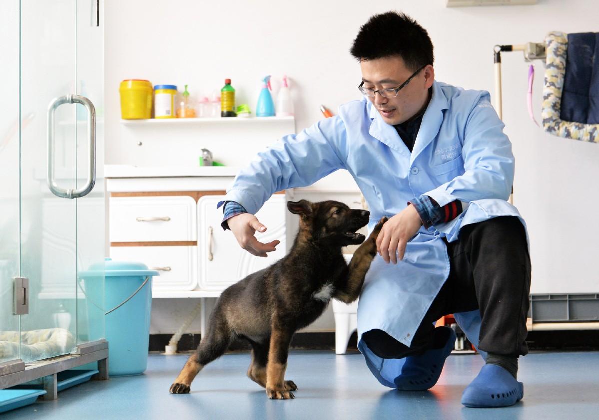 Полицейскую собаку с совпадением ДНК на 99,9% клонировали ученые Китая