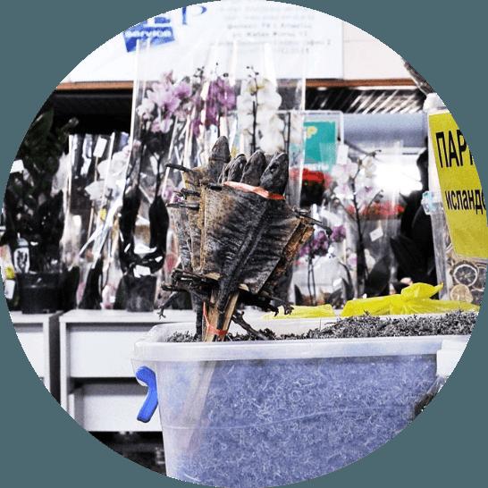 вяленая ящерица Алматы Зеленый базар покупка развлечение город юмор продажи
