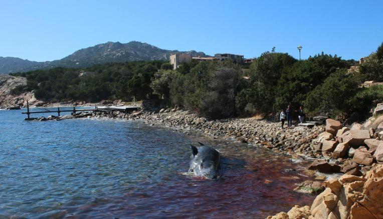 Беременная самка кита умерла из-за загрязнения желудка пластиком