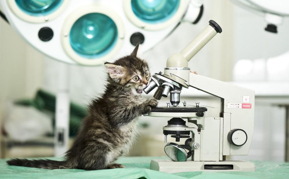 сша эксперименты кошки