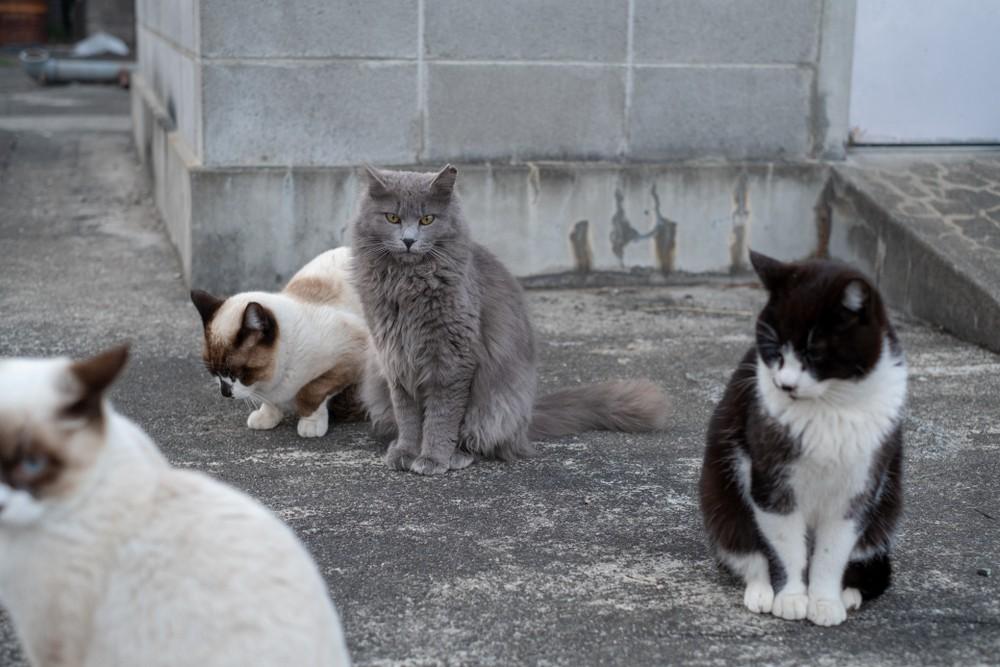 Два миллиона диких кошек планируют убить в Австралии