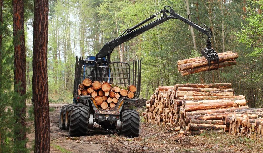 Управление туризма Алматы обещает сохранность деревьев на Кок-Жайляу