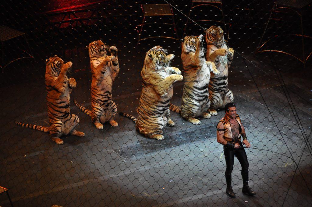цирк Магас Ингушетия запрет животные природа гуманное отношение