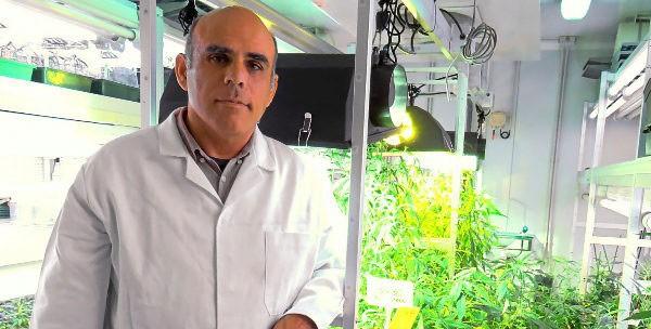 «Легальную марихуану» разработали в Испании