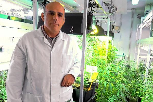 легальная марихуана разработана в испании