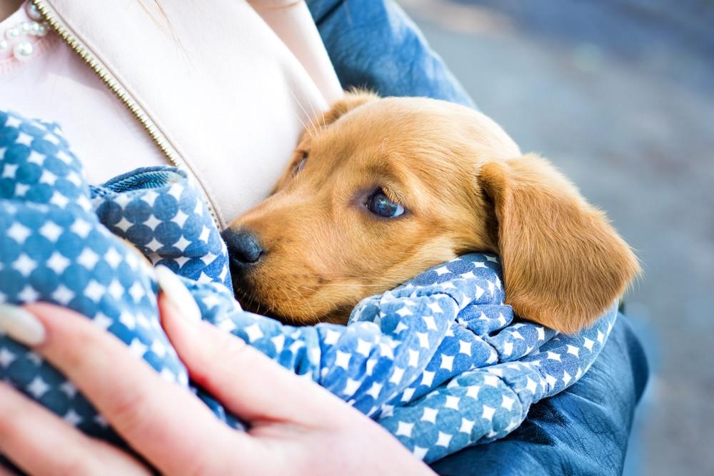 любовь к собакам ДНК мутация генов наука медицина исследование