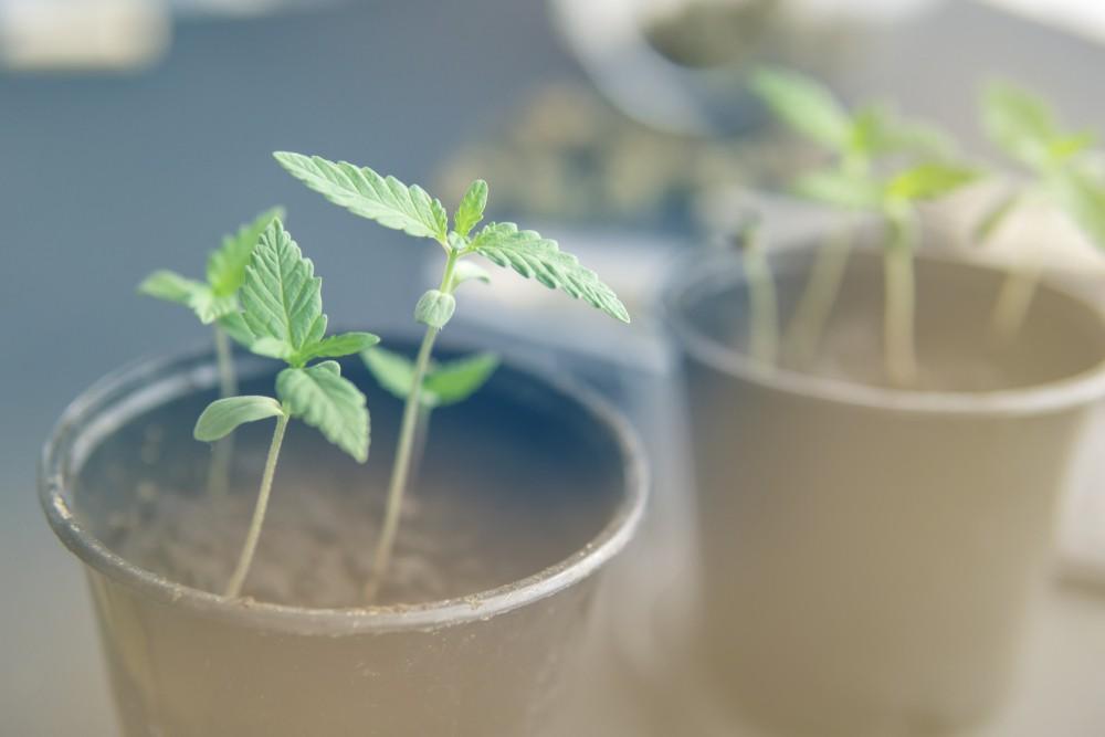 технической конопли марихуана бумага производство Казахстан