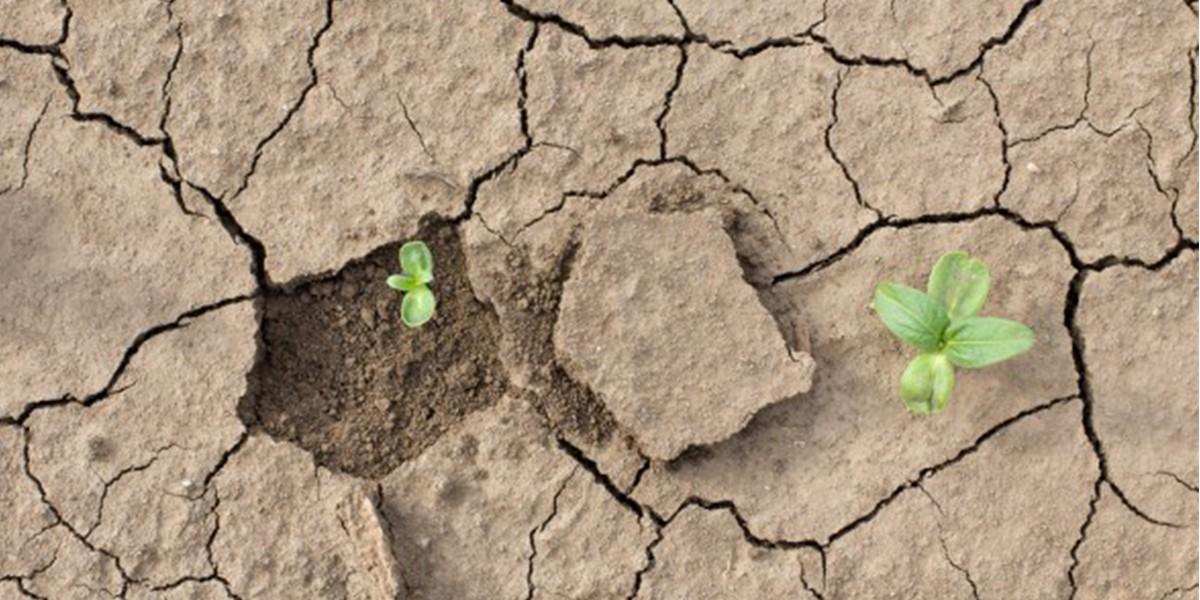 В Эфиопии борются с изменением климата: посажено более 350 миллионов деревьев