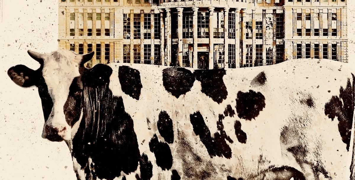 Жили две коровы, или Вопль среднего класса