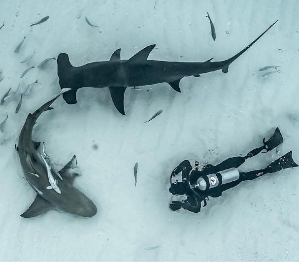 Поль де Гельдер акулы