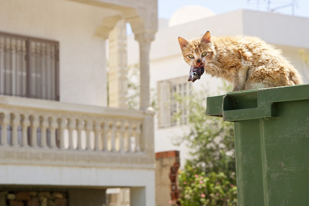 Штраф за милосердие: кормить бездомных котов запретили в Бельгии