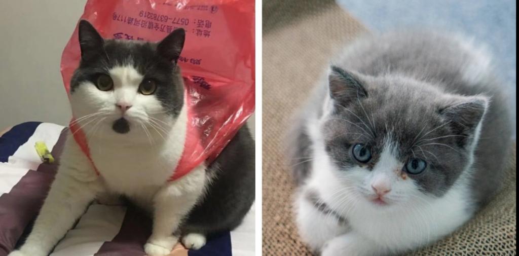 Клонированный за 35 тысяч долларов котенок не похож на оригинал