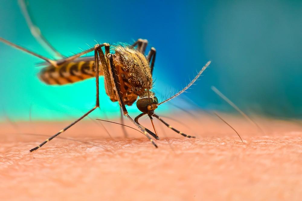 В США комары переносят смертельный вирус