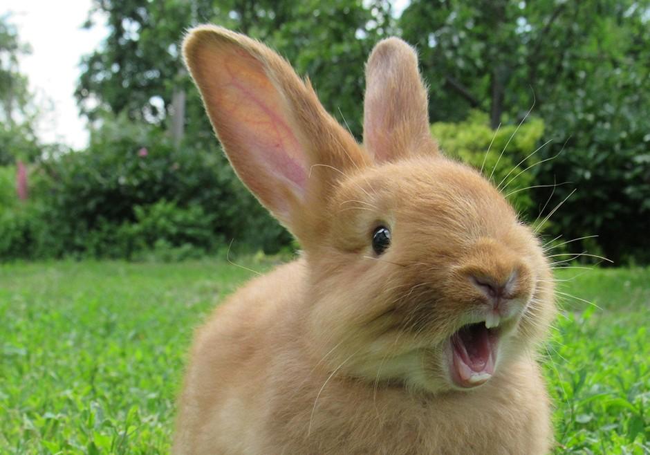кролики знают секреты женского оргазма