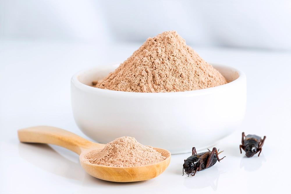 Конопля, сверчки и какао-бобы: в США начали выпускать «мясо» из альтернативного белка