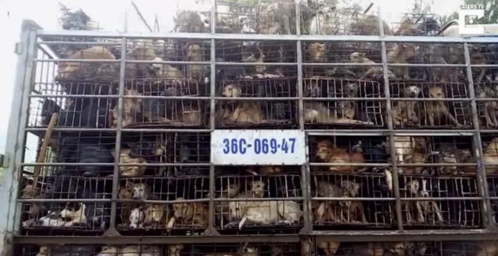 Сеул отказался от заготовок собачьего мяса