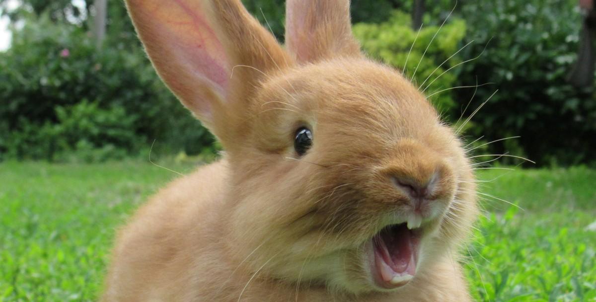 Ученые на кроликах поняли природу женского оргазма