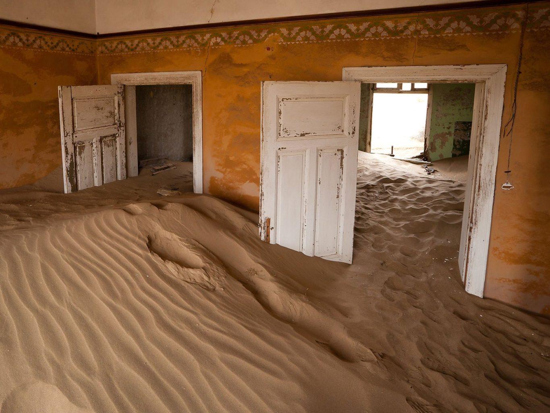 Скоро аулы занесет песком: в Алматы началась акция по защите саксаула