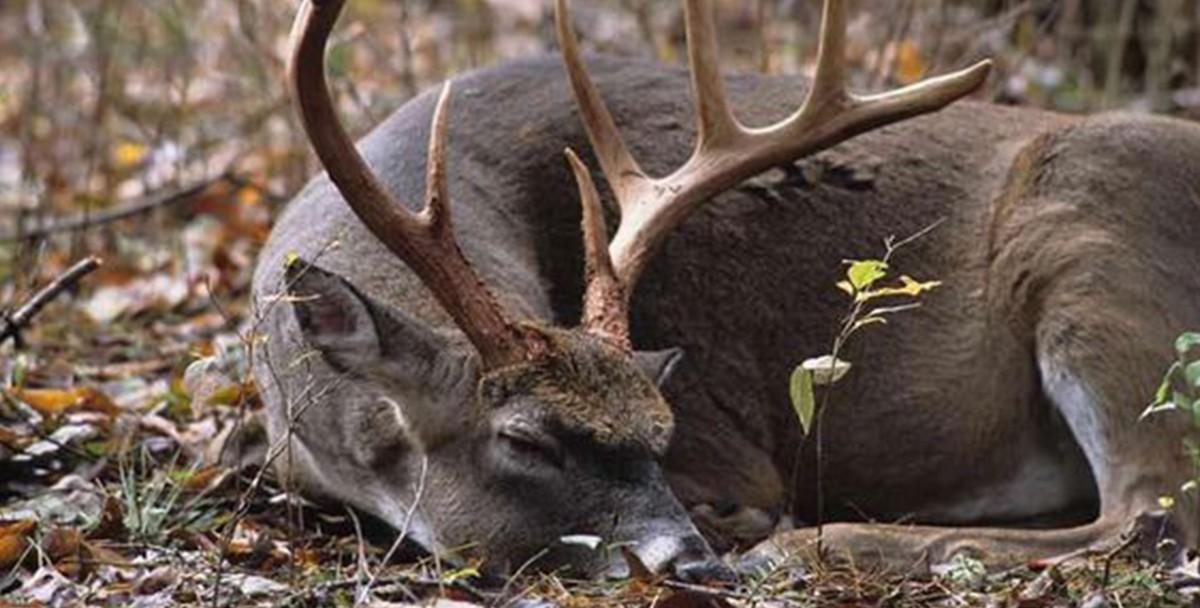 В национальном парке Таиланда нашли мертвого оленя с 7 кг пластика в желудке
