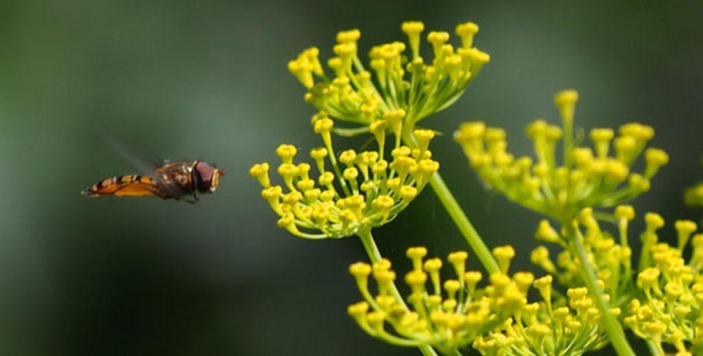Вымирание насекомых