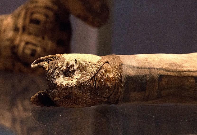 Кошки, кобры и крокодилы: в Египте найден некрополь с мумиями животных