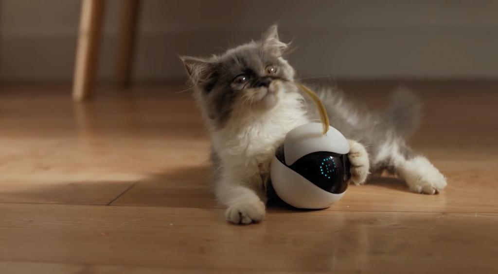 робот - друг кошки