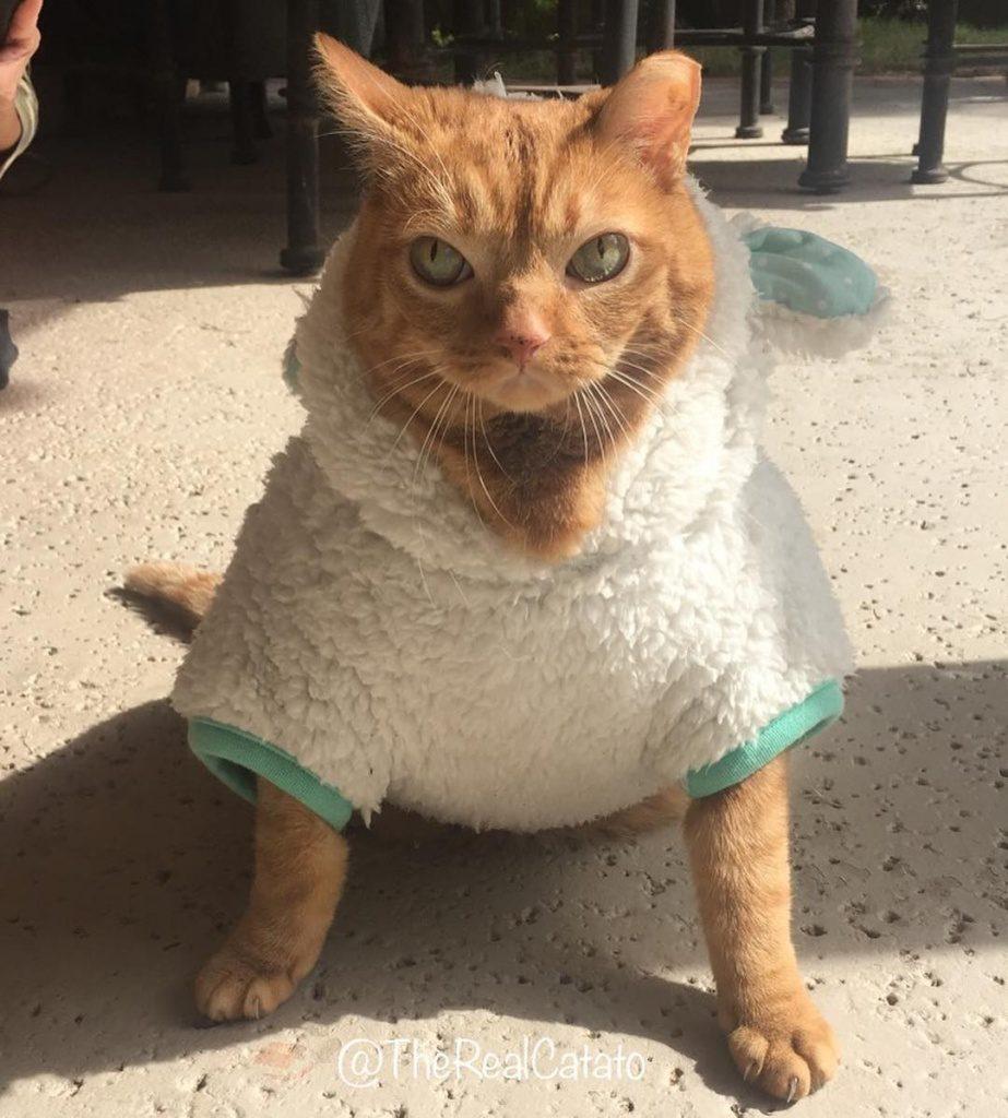 кошка с огромными глазами