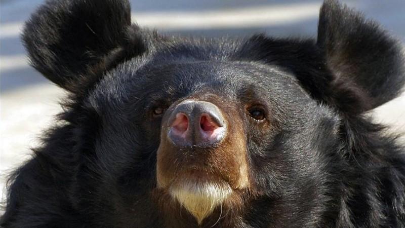 Медведь впал в зимнюю спячку прямо в японской поликлинике