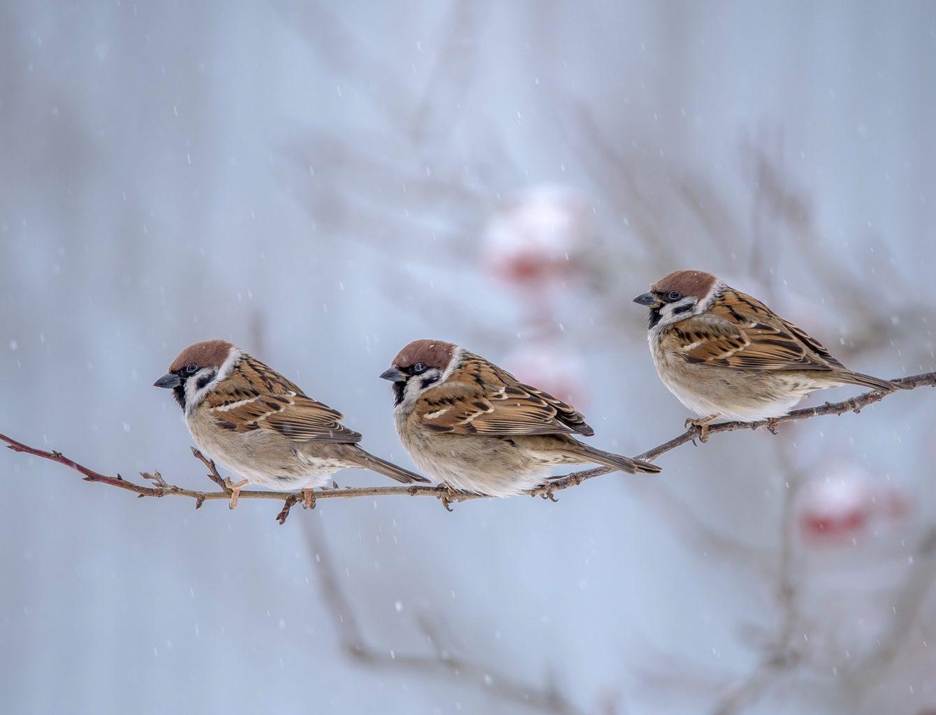 Ученые: из-за глобального потепления певчие птицы стали меньше в размерах